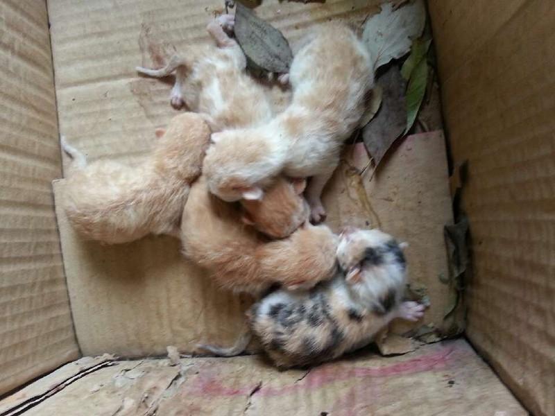 我姐家的老猫又生了一窝小猫崽,猫咪个个都粉可爱滴! 因为农村上嫌少有人家喜欢养猫,所以这些猫咪的命运多数是被扔到河里淹死的,为了避免这种悲剧的发生,本人特意在此发帖,希望有爱猫人士愿意领养一只猫咪回去饲养。 据调查,猫咪是相当有灵性的一种动物哦! 最后祝愿所有爱护动物的人士,健康平安,家庭幸福,合家欢乐! 本人联系方式: QQ :875109420/15152280832 注:非诚勿扰! 以下是刚出生的猫咪的照片!