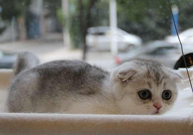 猫吧 可爱小猫小宝