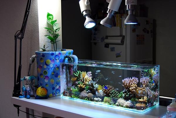 把海洋世界带回家,专业制作海水,淡水鱼缸